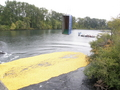Duck Race - Photo 3